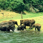 Periyar Wild Life Sanctuary-Thekkady