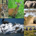 A Day in Kaziranga National Park