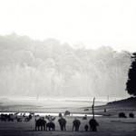 image_485_Nagarhole-National-Park_003