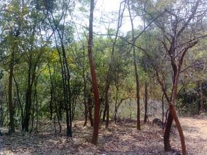 Forest_Kambalakonda_Wildlife_Sanctuary_Visakhapatnam
