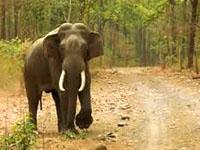 rajaji_national_park