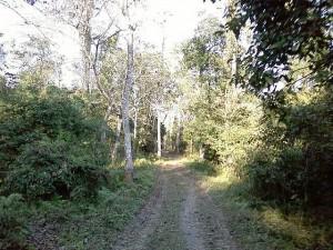 Bura_Chapori_Wildlife_Sanctuary_in_Assam