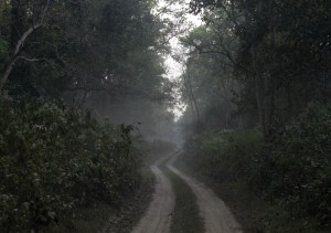 Isolated_trails_through_the_dense_Dudhwa_National_Park