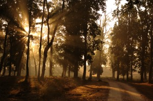 Morning-in-kanha-park