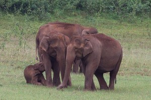 Periyar_National_Park_-India-8