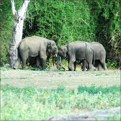 Bandipur Wildlife