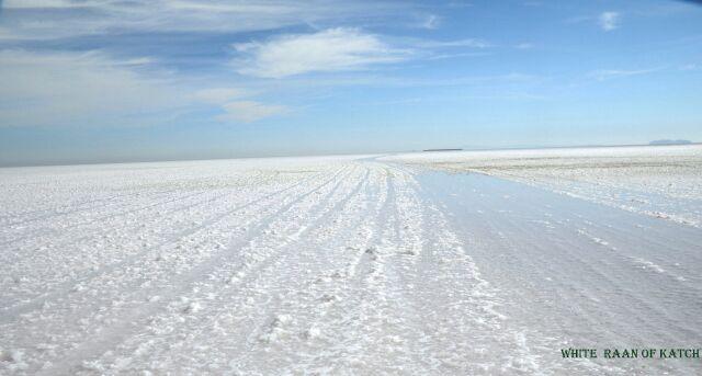 White ran of katch-gujarat