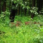 1280px-Nagarhole_National_Park,_Kodagu_6898