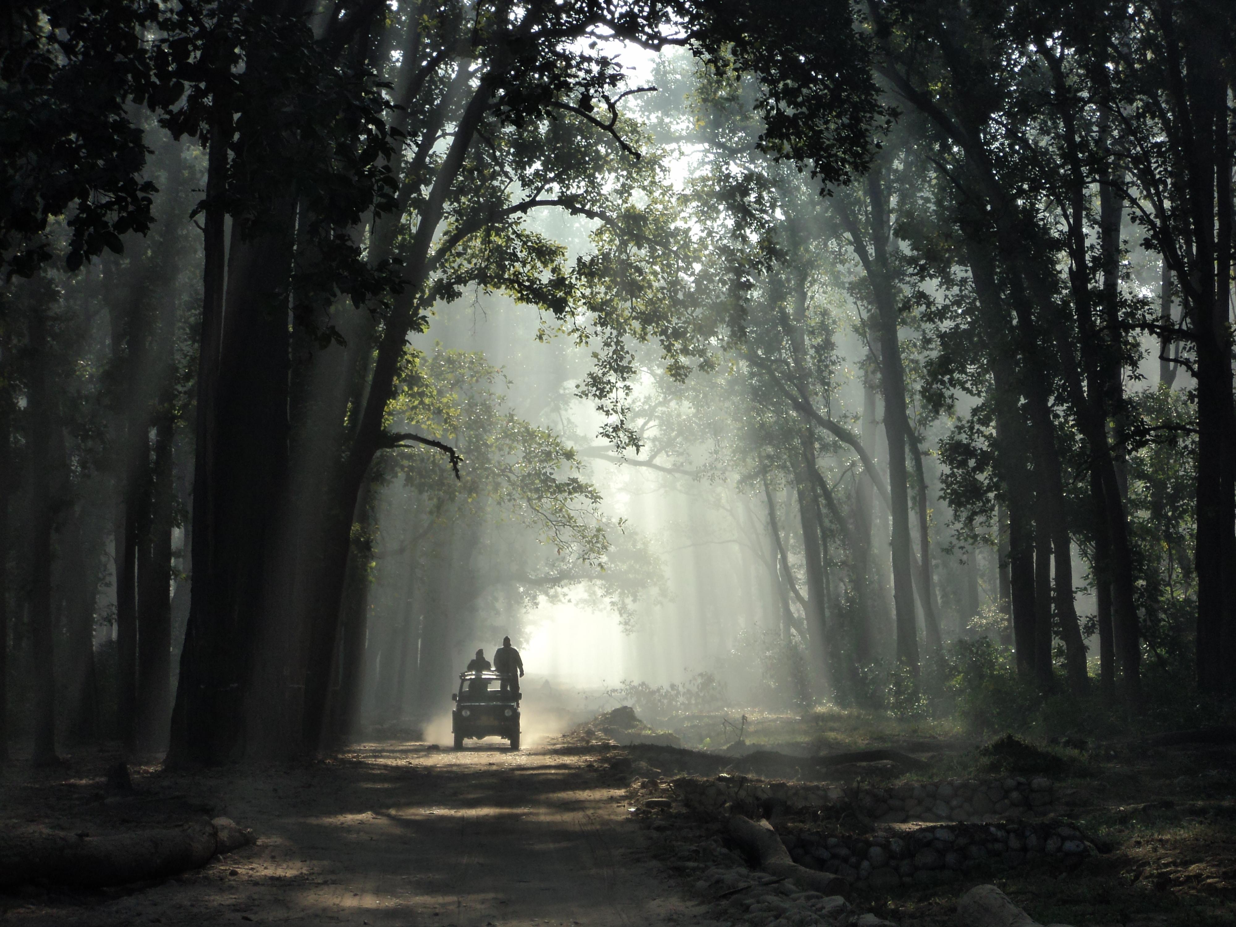 Jim_Corbett_National_Park_(India)
