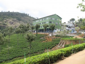 Tea_factory_and_tea_plantation