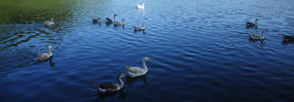 banner-mayem-lake