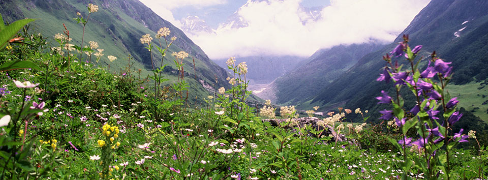 valley_of_flowers_banner