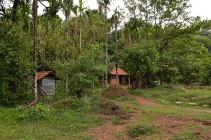Agumbe_Rain_Forest_Research_Station