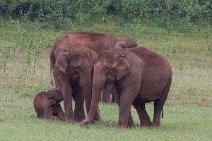 Periyar_National_Park_-India-8