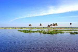 Kuttanad_landscapes-WikiJalayatra-ViswaPrabha-08