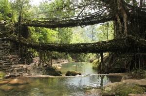 Living_root_bridges,_Nongriat_village,_Meghalaya2
